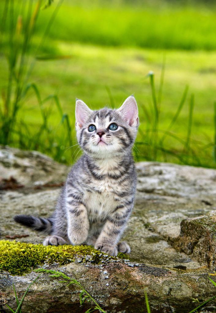 Retrato de un gatito, he escogido aposta la sombra de un árbol, para que estuviese iluminado con una luz suave y equilibrada.
