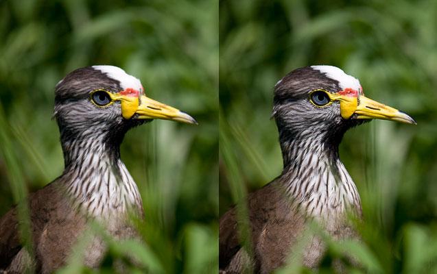 Diferencia entre dos imágenes, una de ellas (izquierda) no se ha enfocado una vez deducido el tamaño, mientras que la otra sí (derecha).