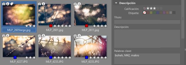 En el Explorador, podemos ordenar las fotos por su calificación (estrellas), etiquetas de color o palabras clave.