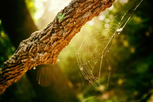 Tela de araña fotografiada a contraluz.