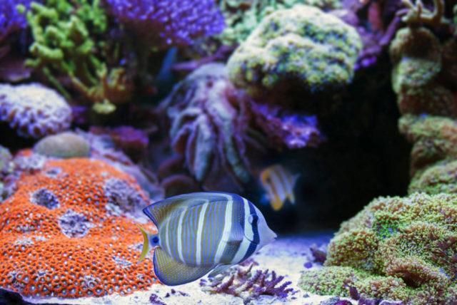 Cómo fotografiar a los habitantes de los acuarios: acuario marino.