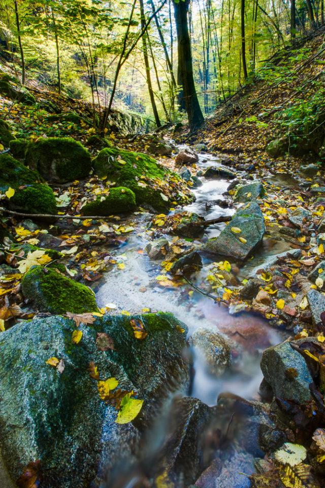 6 consejos básicos para hacer fotografías del agua: Un arroyo en el bosque con varios meandros, formando una curva en forma de S.