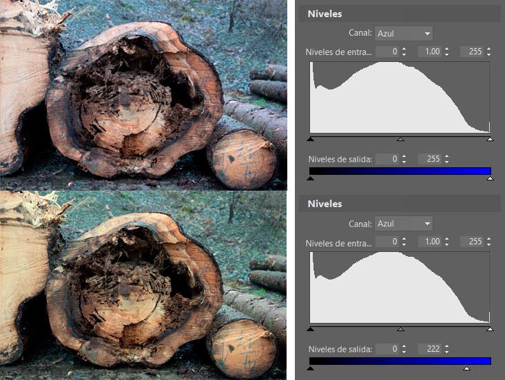 Controla el espectro de color de las fotos con ayuda de los niveles: La naturaleza, a veces, hace lo que quiere.