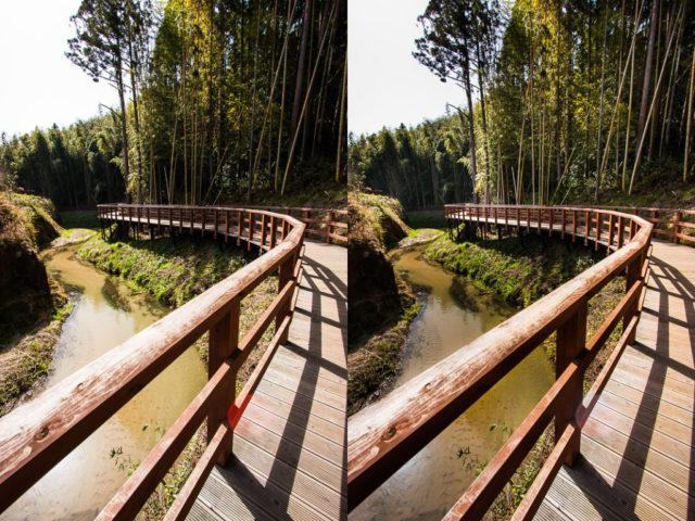 Retoques con la sobreexposición y la subexposición: Bosque original y tras el uso de la sobreexposición y la subexposición.